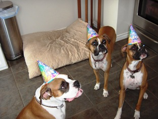 Trucker's Adoption Party